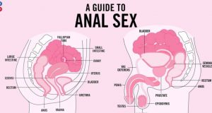 All about anal sex